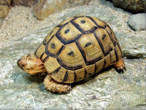 Các 'hoa khôi' trong thế giới rùa