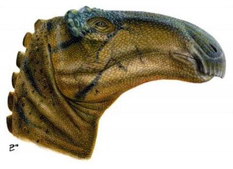 Phát hiện thêm một loài khủng long ăn cỏ