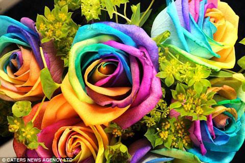 Ngắm hoa hồng đa sắc độc đáo