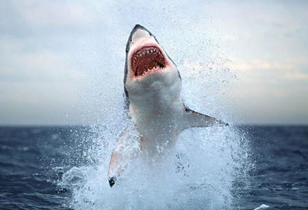 Cá mập thường tấn công người khi trăng non