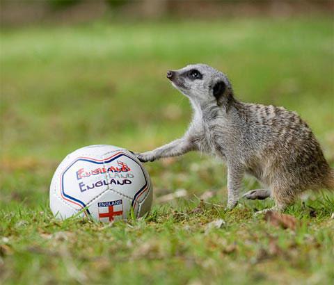 Động vật đón World Cup 2010