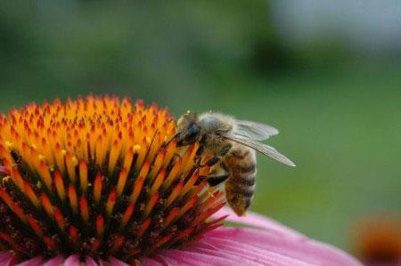 Phát hiện đảo 'ong mật' ở sa mạc Sahara
