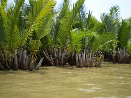 Biến đổi khí hậu tàn phá Mũi Cà Mau