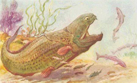 Tổ tiên xa xưa của loài người là cá?