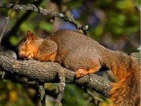 Ngủ nhiều sẽ giúp cơ thể kháng bệnh ký sinh
