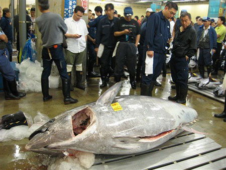 Con cá ngừ nặng kỷ lục ở Nhật