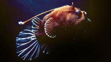 Những sinh vật biển kỳ lạ ở dải san hô ngầm