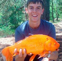 Anh: Bắt được cá vàng 'siêu lớn' nặng hơn 2 kg