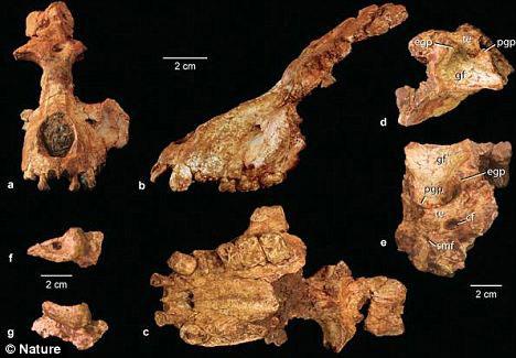 Phát hiện hóa thạch tổ tiên cuối cùng của người và khỉ