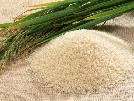 Loại gạo mới ngâm nước ấm cũng chín