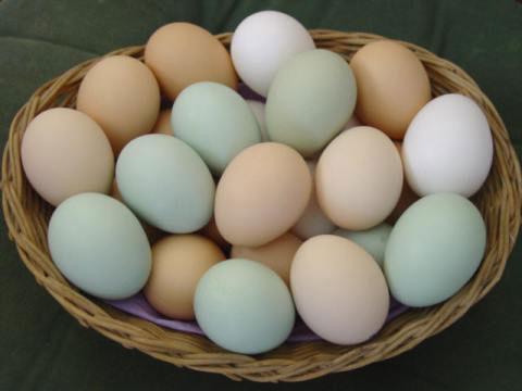 Ăn trứng – cân nặng giảm xuống, trí tuệ tăng lên