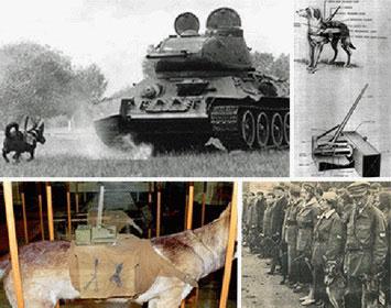 """Những """"phát minh vũ khí"""" điên khùng nhất thế kỷ"""
