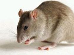 Gửi chuột và sên lên vũ trụ