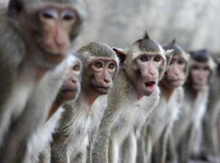 Giới khoa học bác tin khỉ bắn súng