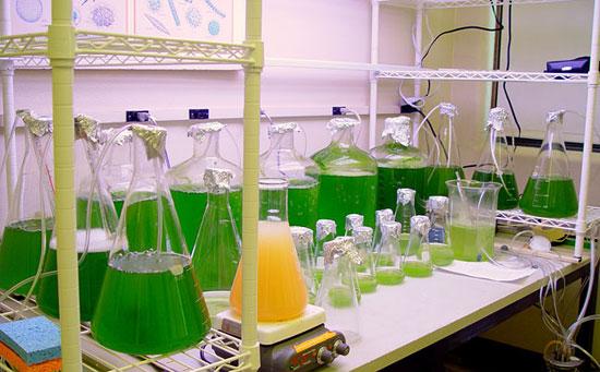 Argentina sản xuất nhiên liệu sinh học từ tảo biển