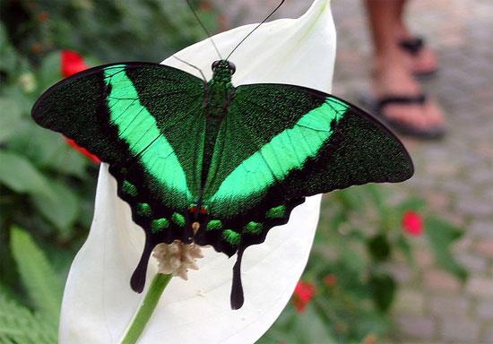 Học cách chống tiền giả từ cánh bướm