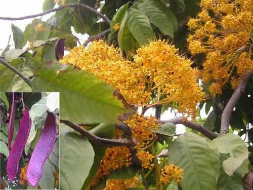 Vườn Quốc gia Phong Nha - Kẻ Bàng nhân giống thành công 5 loài cây quý