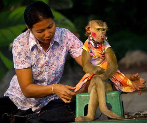 Khỉ làm xiếc