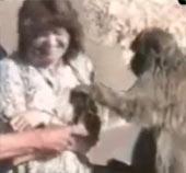 Clip vui với động vật