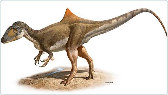Phát hiện khủng long lưng gù ăn thịt mới ở châu Âu