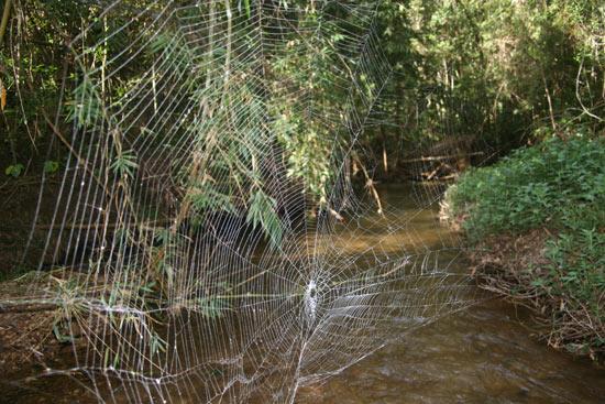 Mạng nhện dài 25 m