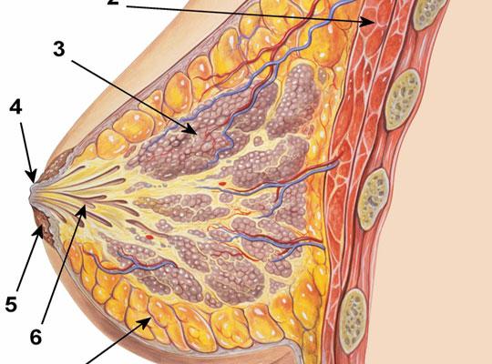 Hướng điều trị mới cho các bệnh nhân ung thư vú