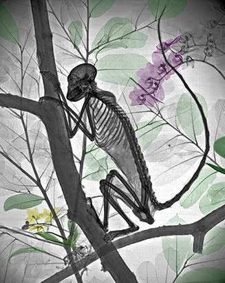 """Vẻ đẹp lạ lùng của thiên nhiên khi """"chụp X-quang"""""""