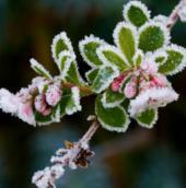 Cơ chế thích nghi với nhiệt độ lạnh của thực vật