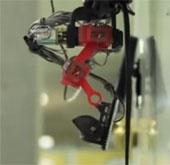 Video: Giới thiệu mô hình robot thằn lằn