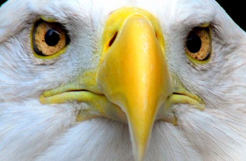 Sức mạnh của đôi mắt động vật