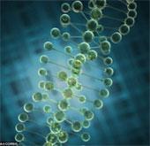 Người châu Âu có làn da trắng nhờ biến đổi gene