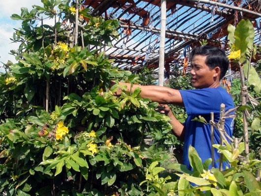 Giải pháp mới đem lại niềm vui cho người trồng hoa