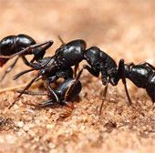 800 con kiến sẽ được đưa vào vũ trụ
