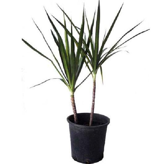 10 loại cây làm sạch không khí trong nhà