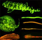 Phát hiện hơn 180 loài cá phát sáng mê hoặc trong biển