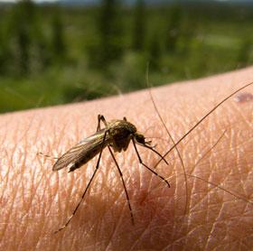 Tìm ra loại thuốc chống muỗi vừa hiệu quả vừa rẻ tiền