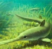 Cá mập cổ di cư để đẻ trứng