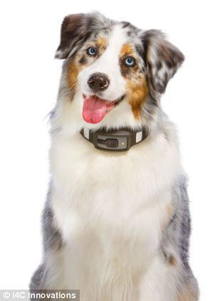 Vòng đeo cổ giám sát sức khỏe vật nuôi Voyce