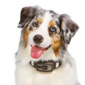 Video: Vòng đeo cổ giám sát sức khỏe vật nuôi Voyce