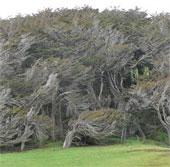Kỳ lạ vùng đất cây cối nghiêng ngả như sóng