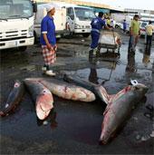 Cá mập gần tuyệt chủng được bán ở chợ cá