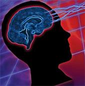 Con người cần sử dụng cả hai bán cầu não để giao tiếp