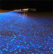 Bờ biển phát sáng tuyệt đẹp như đom đóm ở Maldives