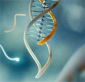 Kẹp DNA giúp chẩn đoán đột biến di truyền gây ung thư