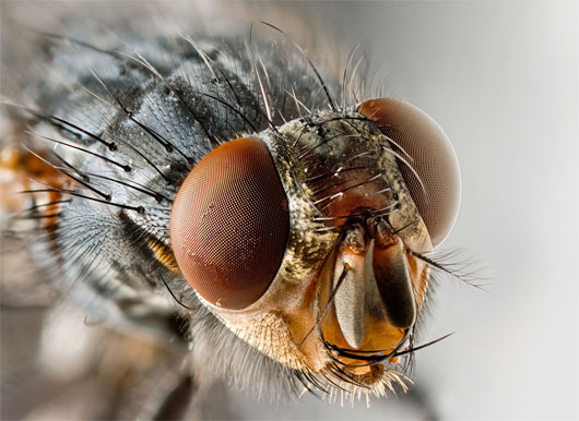 Về mặt lý thuyết, hiện tượng khúc xạ gây rất nhiều sự phiền toái cho côn trùng, đặc biệt là loài ruồi.