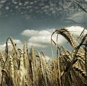 Phương pháp mới tăng sản lượng cây trồng