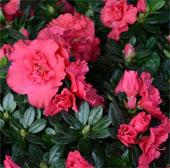 Sắc hoa rực rỡ trên phố Hoàng Hoa Thám