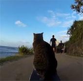 Video: Mèo trượt ván điệu nghệ