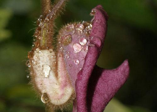 Phát hiện loài thực vật mới ở Quảng Bình