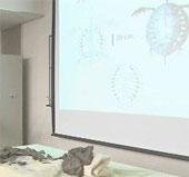 Nhật Bản phát hiện rùa hóa thạch 70 triệu tuổi